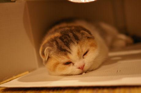 IMGP6996ー猫