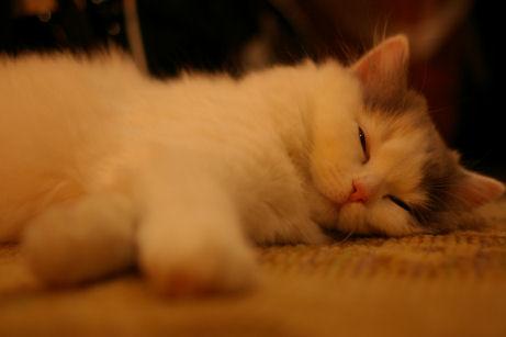 IMGP6999ー猫