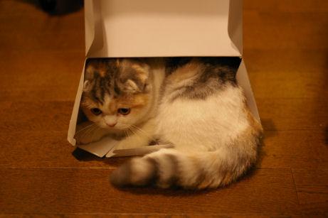 IMGP7021ー猫