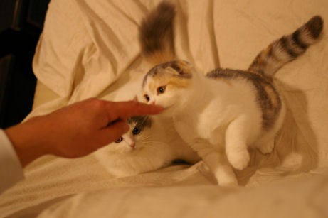 IMGP7129ー猫