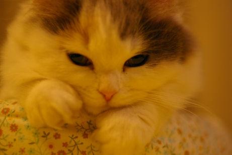 IMGP7108ー猫