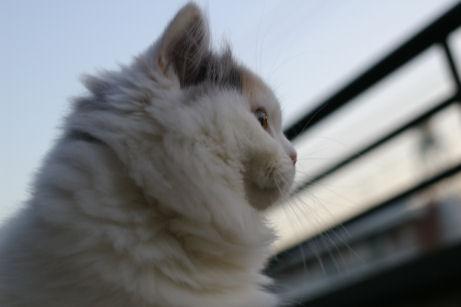 IMGP7313-猫
