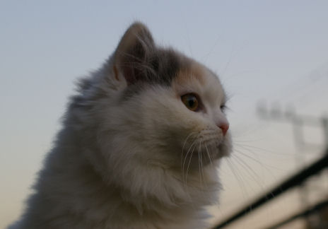IMGP7315ー猫