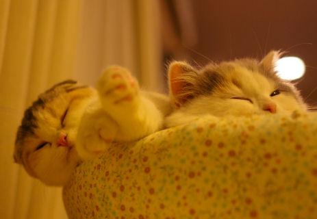 IMGP7227ー猫