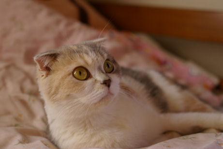 IMGP7408ー猫