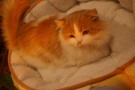 IMGP7339ー猫