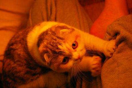 IMGP7442ー猫