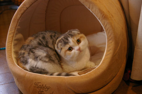 IMGP7459ー猫