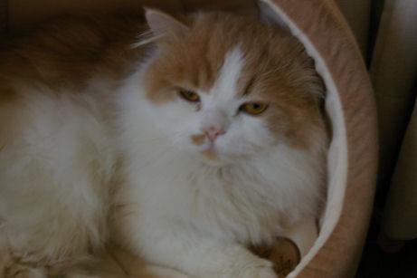 IMGP7460ー猫