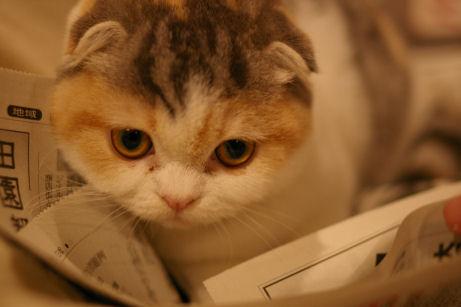 IMGP7245ー猫