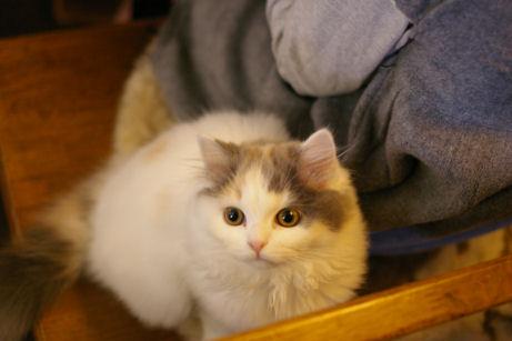 IMGP7222ー猫