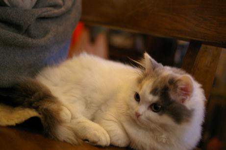 IMGP7225ー猫