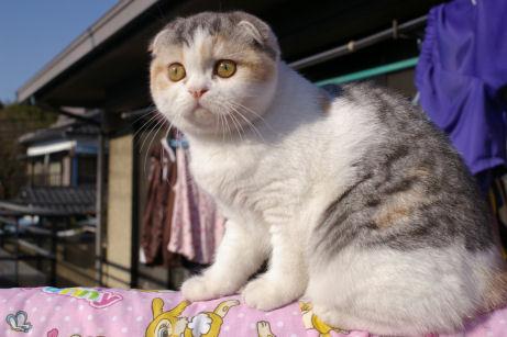 IMGP7353-猫