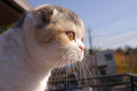 IMGP7367ー猫