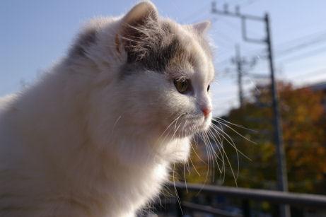 IMGP7368ー猫