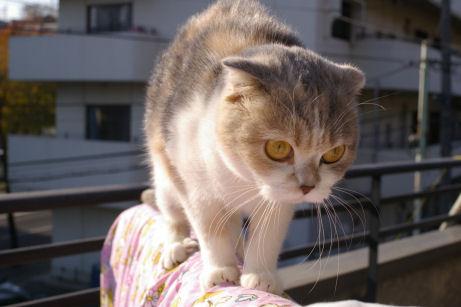 IMGP7385ー猫