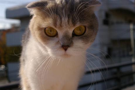 IMGP7383ー猫