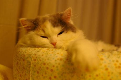 IMGP7565ー猫