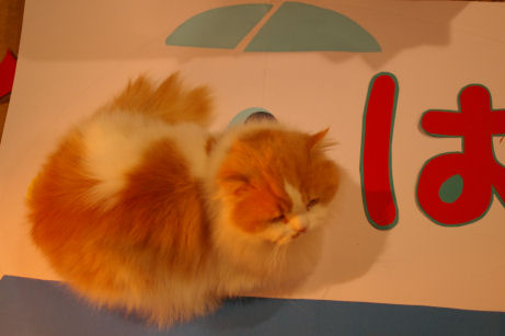 IMGP7659ー猫