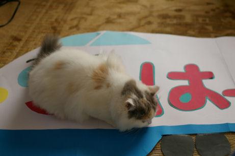 IMGP7667ー猫
