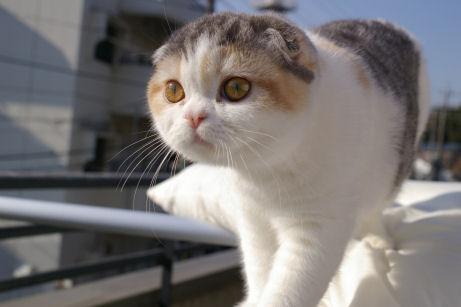 IMGP7693-猫