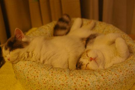 IMGP7723ー猫