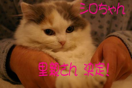 IMGP7167ー猫