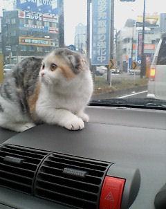 20071222145357ー猫