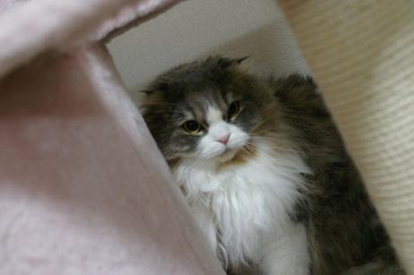 IMGP7788ー猫