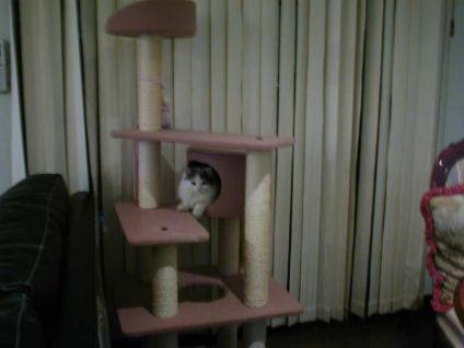 pe2ー猫