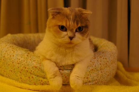 IMGP7833-猫