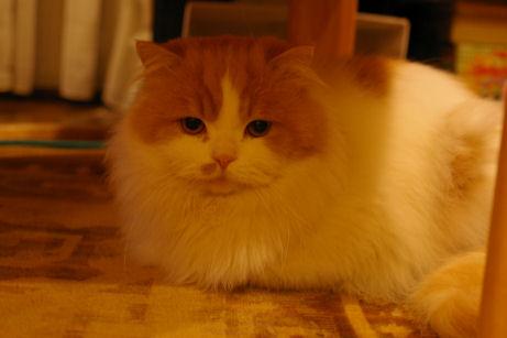 IMGP7836ー猫