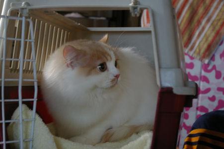 IMGP0618-猫