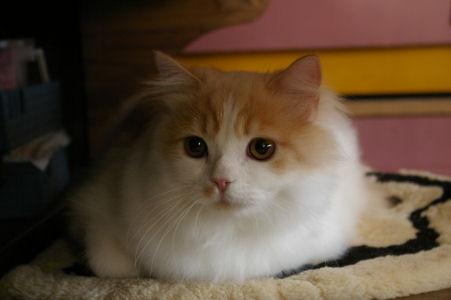 IMGP0628ー猫