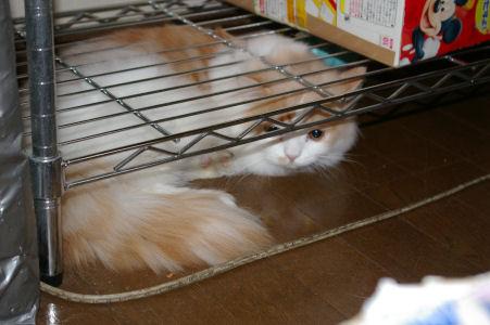 IMGP0641ー猫