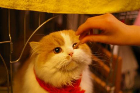 IMGP8269ー猫