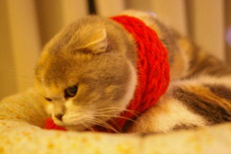 IMGP8295ー猫