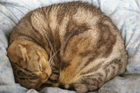IMGP8238-猫