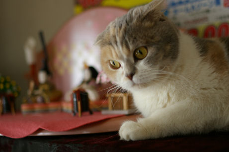 IMGP8304ー猫