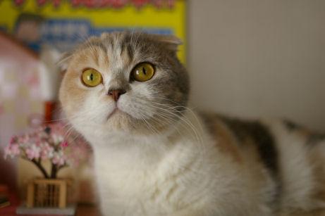 IMGP8308ー猫