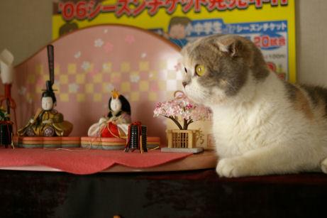 IMGP8309ー猫