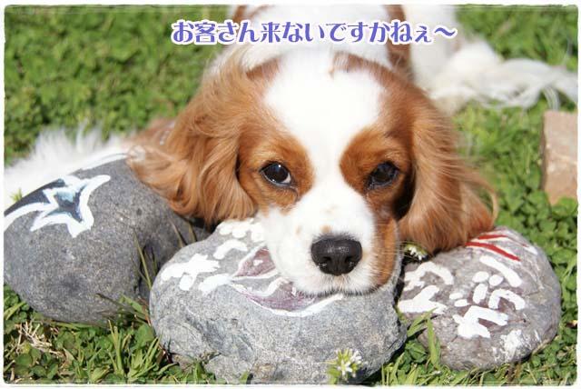 20120328_025.jpg