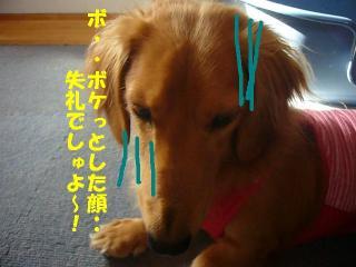 失礼(`ω´)