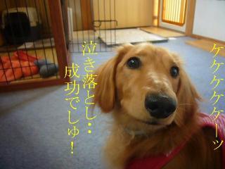 泣き落とし成功!