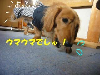 芸犬(爆)