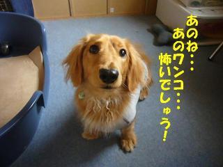 怖いの・・