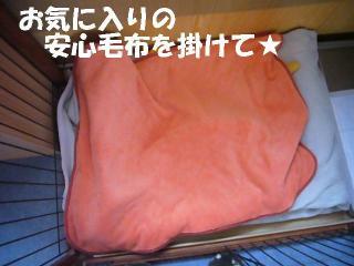 +安心毛布+