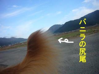 尻尾と青空