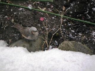 2008-03-05(s)tugumi3.jpg