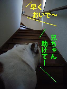 画像 2666+1